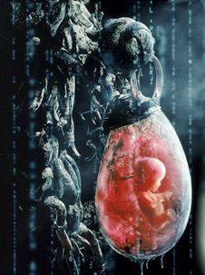Batteria umana