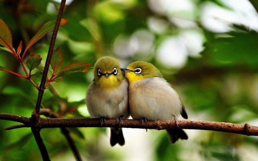 L'Amore, Umano e Divino