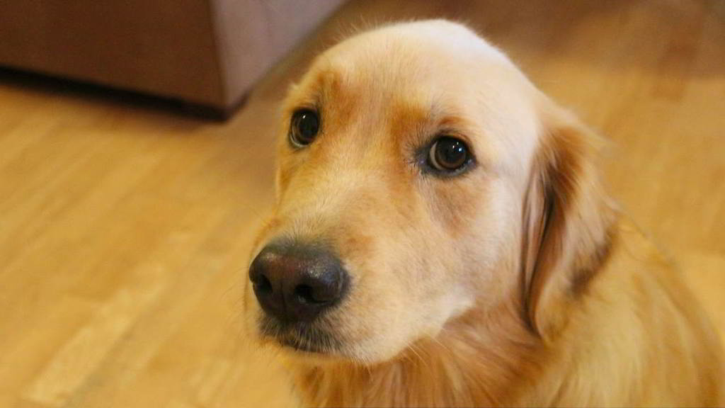 immagine di cane
